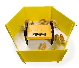 Chicken Brooder Enclosure
