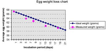 emu egg hatching instructions