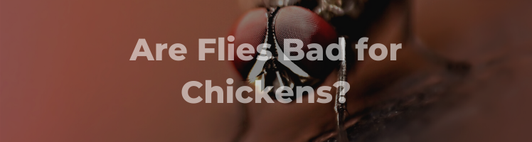 are flies bad for chickens